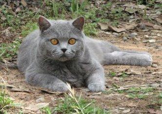 Persian Cat Rescue Ottawa